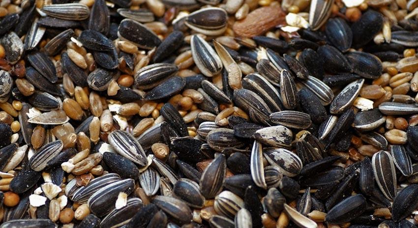 Misto semi con Girasole Nero e Girasole Striato